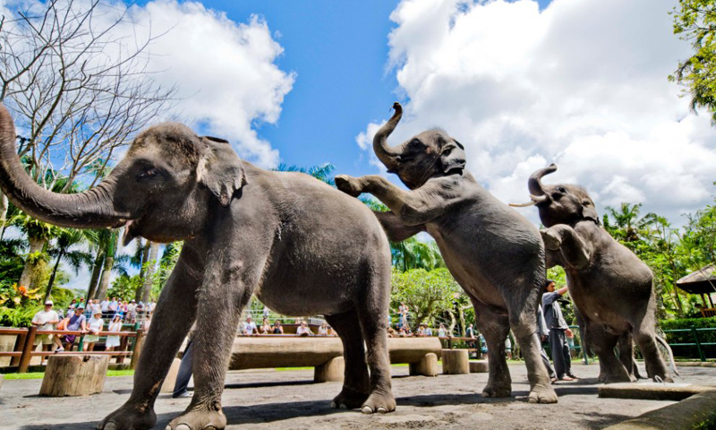 bali adventure tours elephant park